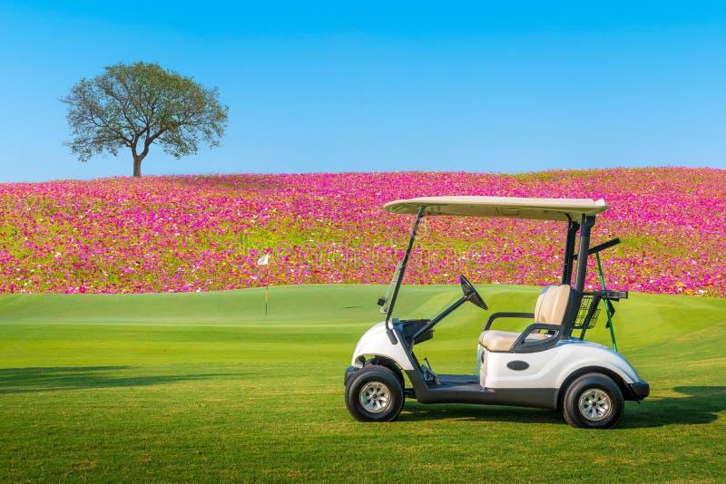 Un carretto di golf che parcheggia sull'erba verde al campo da golf con il grande albero immagini stock libere da diritti