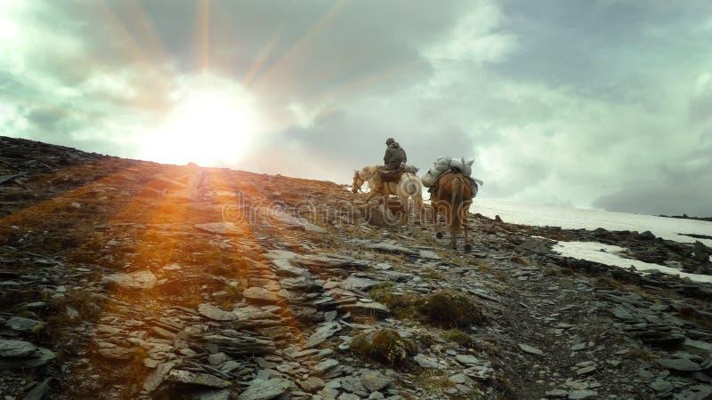 Un cavalier avec deux chevaux marche le long du chemin aux montagnes photo libre de droits