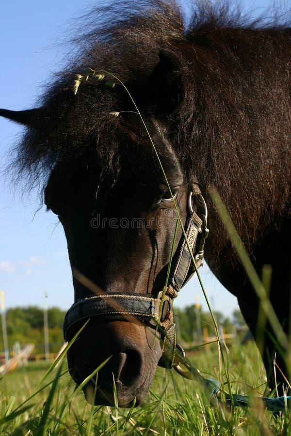 Download Un cavallino immagine stock. Immagine di cavallo, cielo - 204101