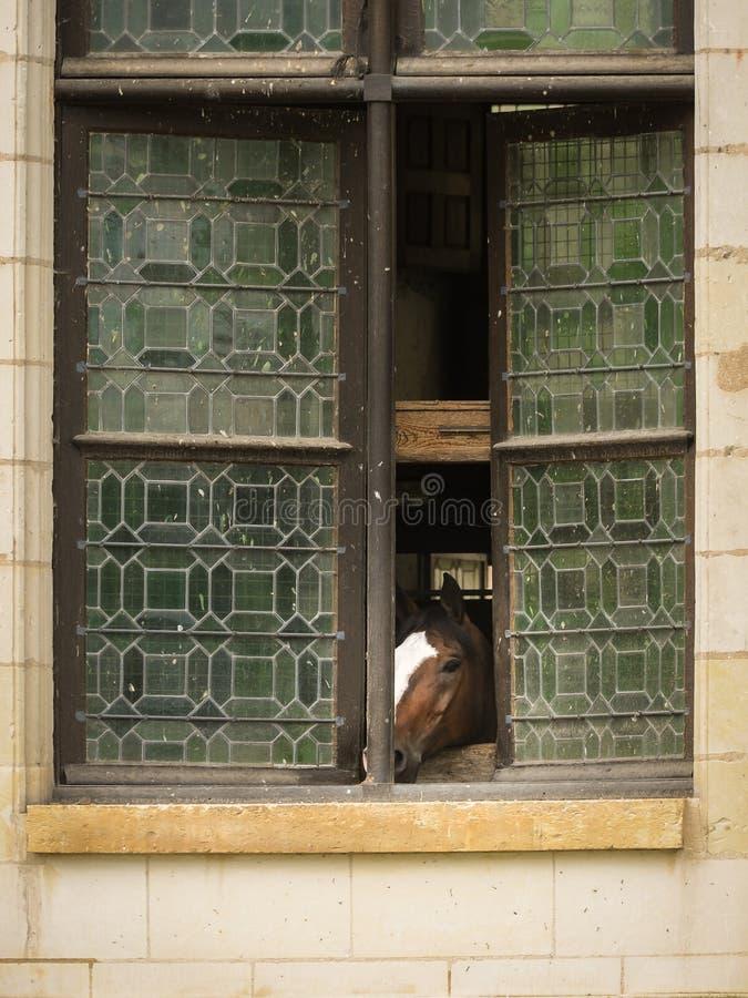Un cavallo che guarda da una finestra fotografia stock