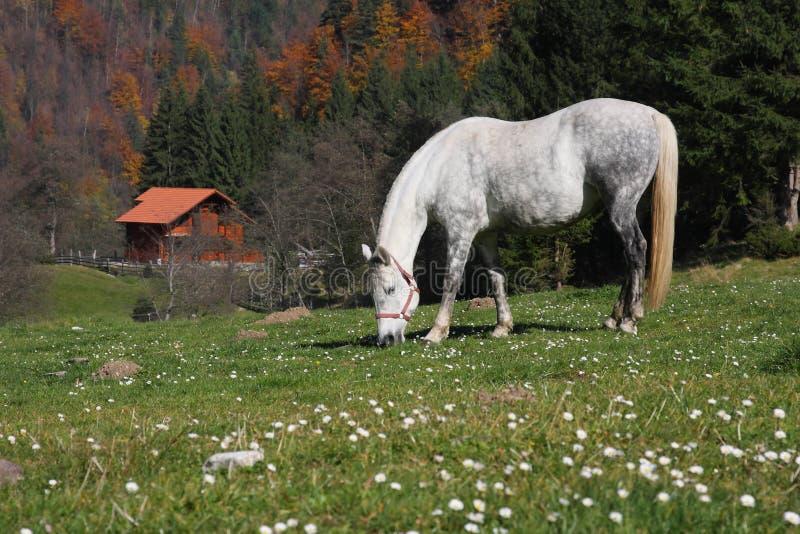 Un cavallo che pasce fotografie stock libere da diritti