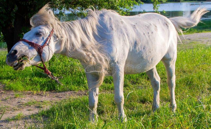 Download Un Cavallo Combatte Con Una Mosca Fotografia Stock - Immagine di equestrian, libero: 117980896