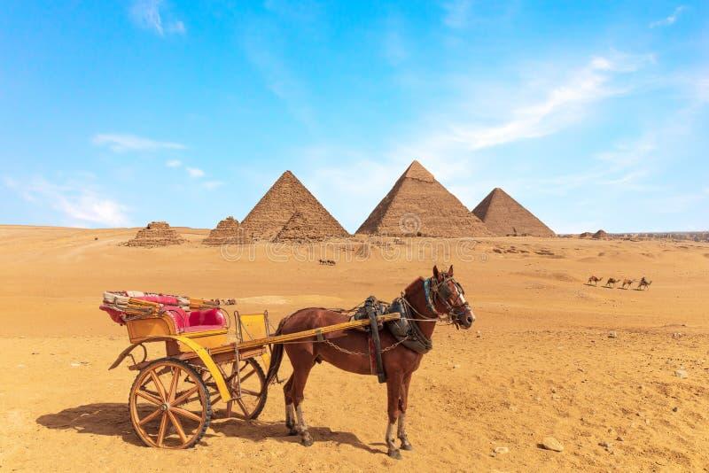 Un cavallo con il carretto davanti alle grandi piramidi di Giza, Egitto immagine stock libera da diritti