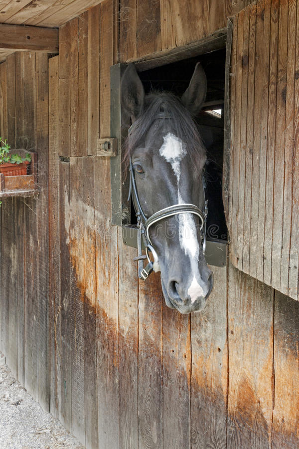 Un cavallo dà una occhiata a dalla porta stabile immagini stock