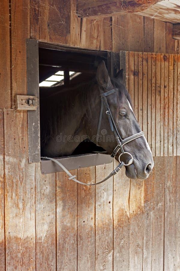 Un cavallo dà una occhiata a dalla porta stabile immagine stock libera da diritti