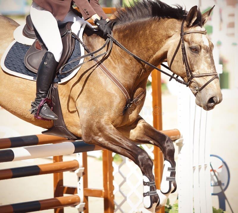 Un cavallo dei salti bulan di un vestito sopra la barriera marrone con un cavaliere nella sella immagini stock