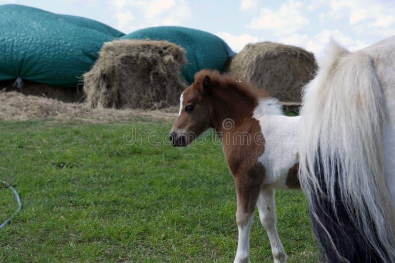 Un cavallo del bambino all'azienda agricola fotografie stock