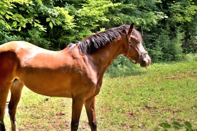 Un cavallo marrone nel giorno soleggiato fotografia stock
