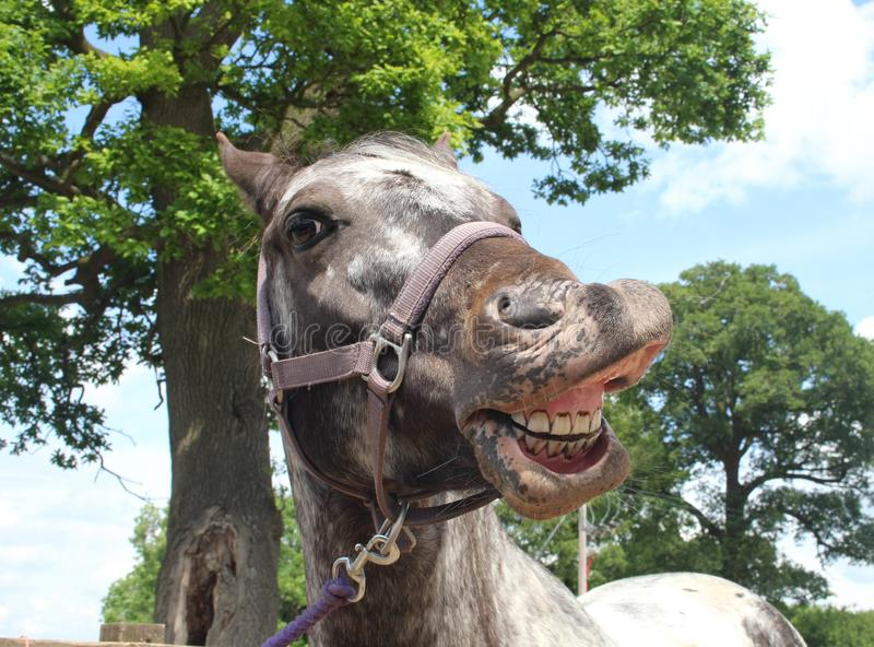 Un cavallo Selfie fotografia stock libera da diritti