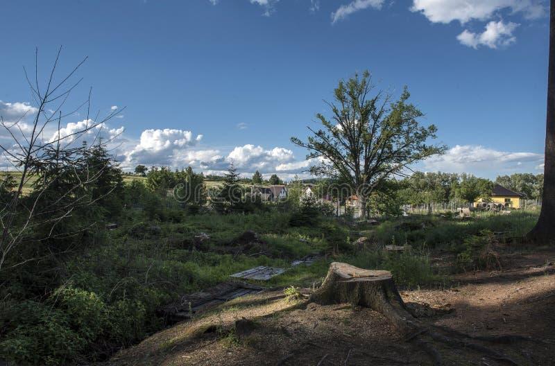 Un ceppo nel legno vicino ad un piccolo villaggio ed al sole immagini stock libere da diritti