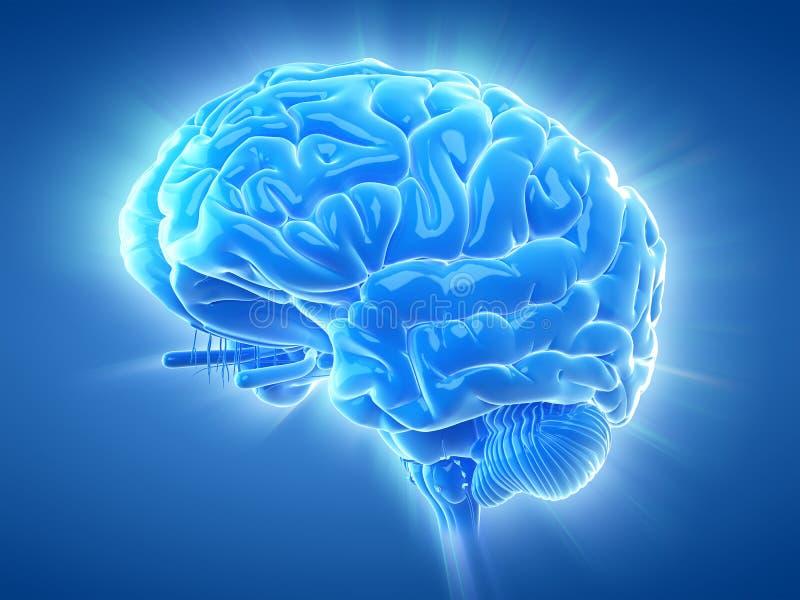 Un cerebro que brilla intensamente stock de ilustración