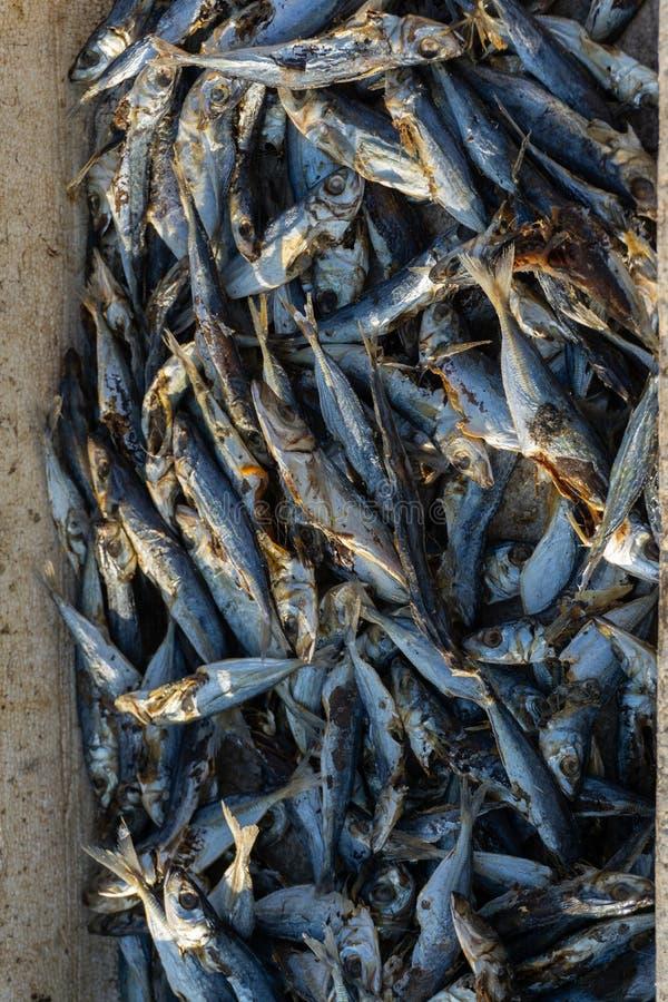 un certain poisson frais pêché par des pêcheurs sont placés à l'intérieur du bassin alors sec sous le soleil pour la revente photographie stock