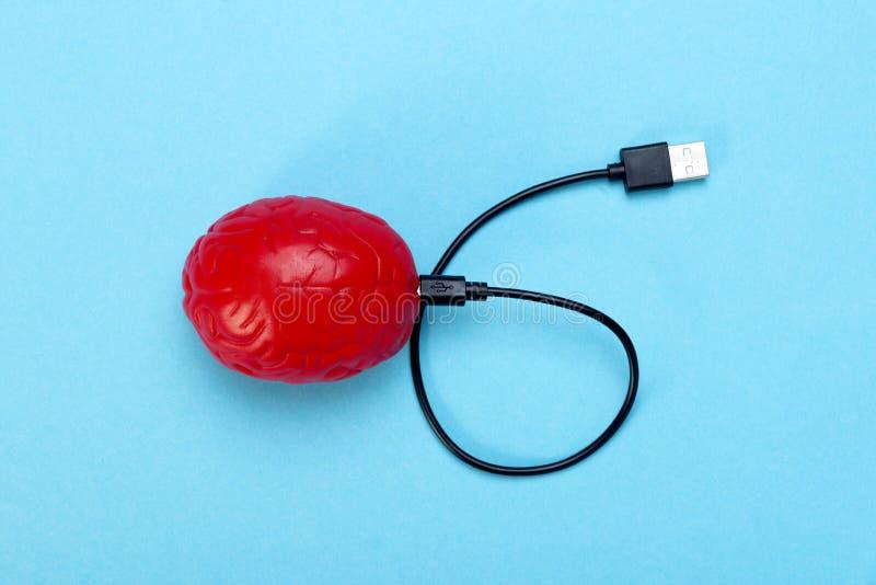Un cervello rosso su un fondo blu e su un cavo di USB collegati a  Il concetto di dipendenza nel pensiero e nelle informazioni immagini stock