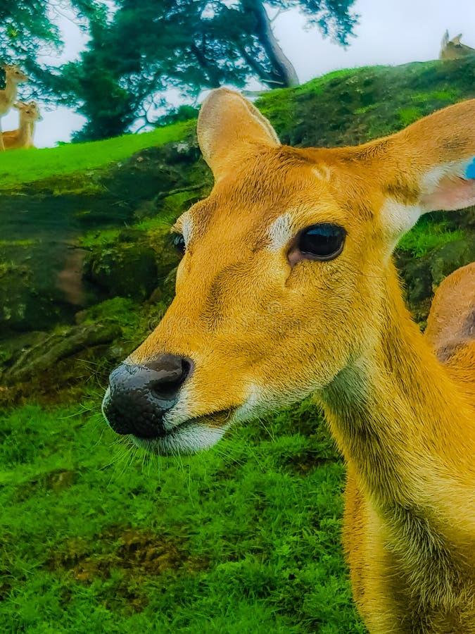 Un cervo fotografia stock