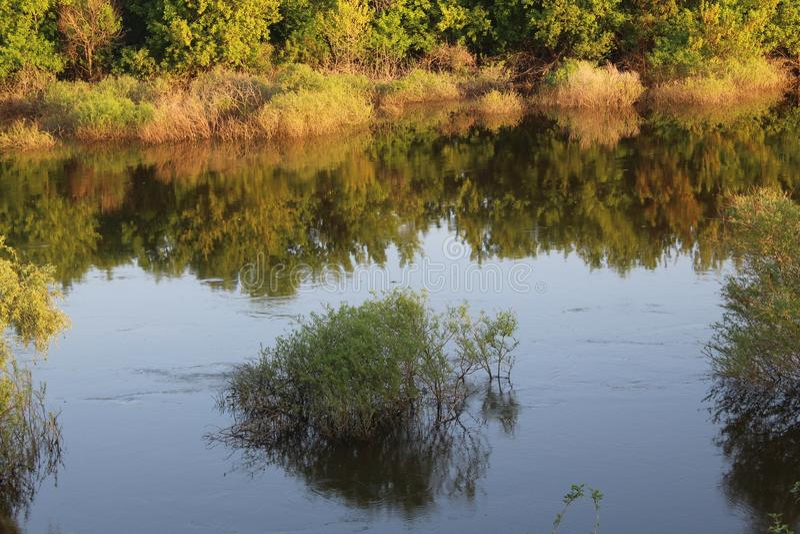 Un cespuglio solo sommerso da un fiume fotografia stock