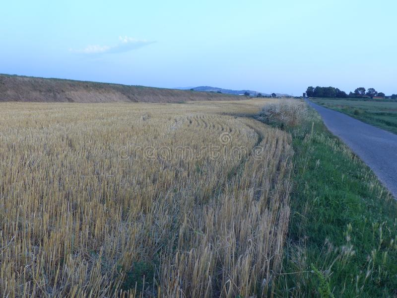 Un champ de blé vers la soirée en Toscane en Italie photographie stock libre de droits
