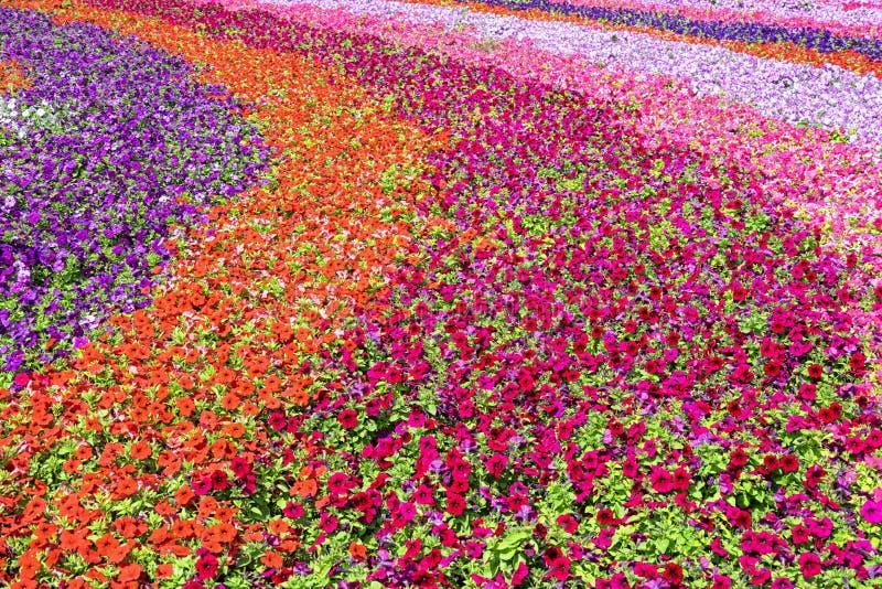 Un champ de fleurs parfait images stock