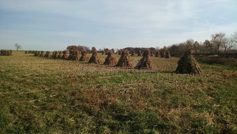 Un champ de pile amish de maïs, meule de foin, récolte photographie stock