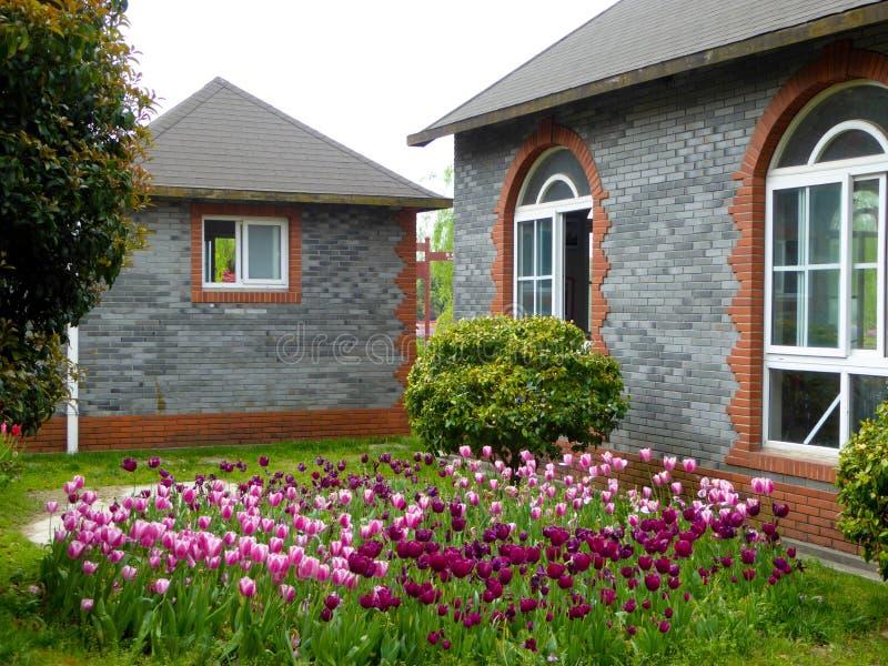 Un champ des tulipes devant deux maisons images stock