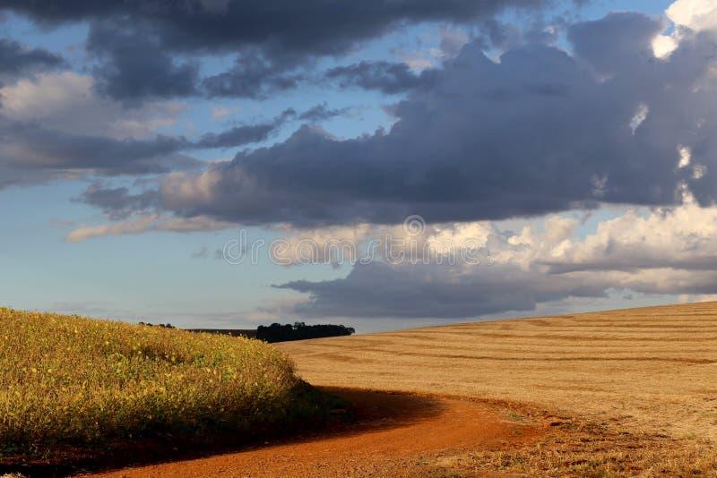 Un champ du soja presque prêt à être moissonné et des autres a déjà moissonné dans grand font Sul, Brésil photo libre de droits