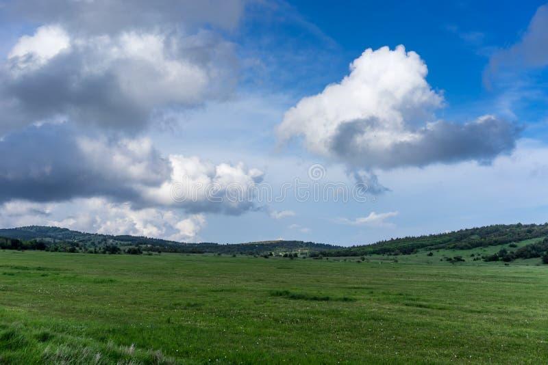 Un champ vert énorme d'herbe sous le ciel bleu et les nuages blancs images libres de droits