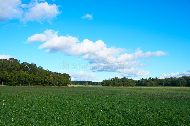 Un champ vert sous un ciel bleu avec des nuages image stock