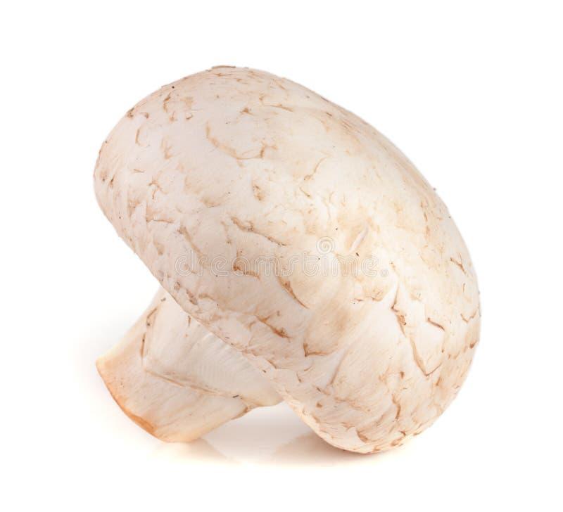 Un champignon frais de champignon de paris d'isolement sur le fond blanc photo stock