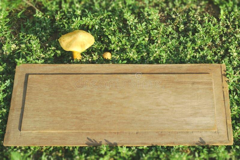 Un champignon jaune avec la vieille planche sur l'herbe, petite herbe blanche, champignons de boletus sur le plancher en bois, ch photos stock