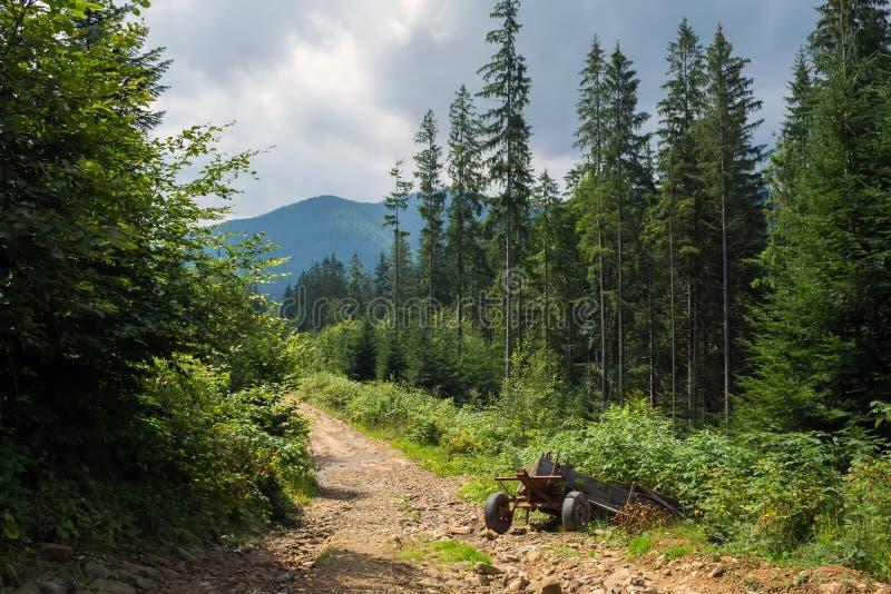 Un chariot cassé, envahi avec des pousses de blé, sur un chemin forestier, haut dans les montagnes photographie stock