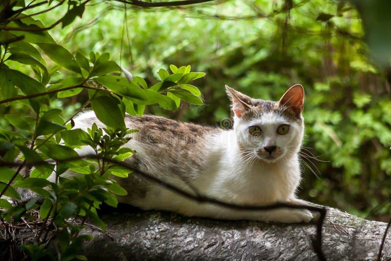 Un chat égaré dans le buisson photo libre de droits