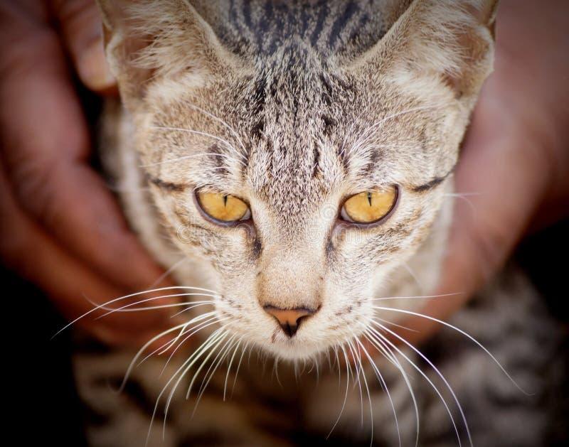 Un chat égaré sur les rues de Delhi images libres de droits