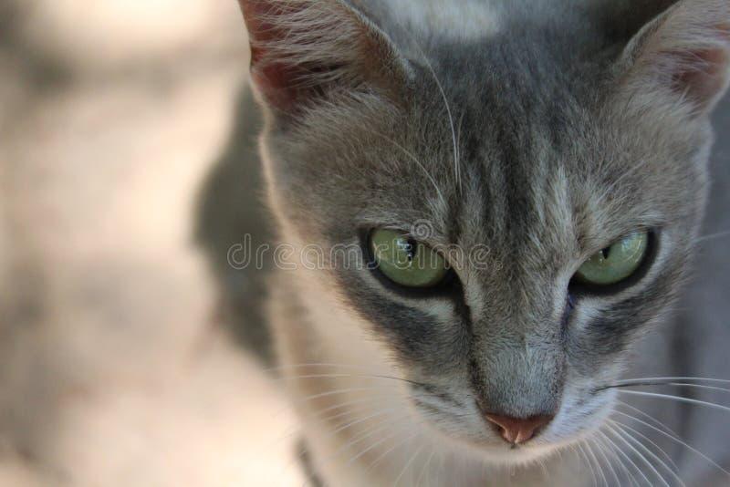 Un chat images libres de droits