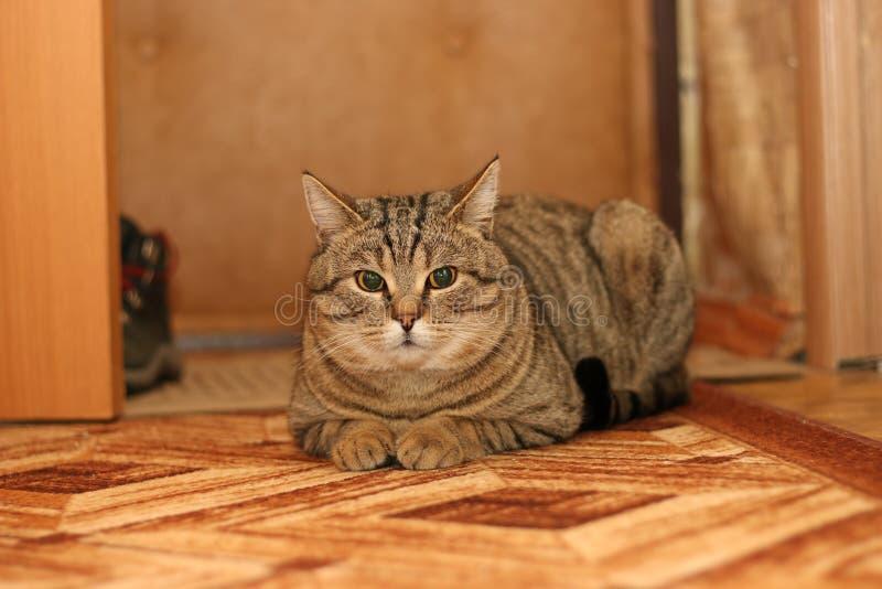 Un chat photos libres de droits