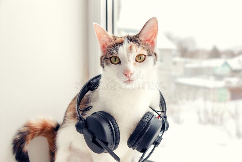 Un chat avec des écouteurs sur le rebord de fenêtre photo libre de droits