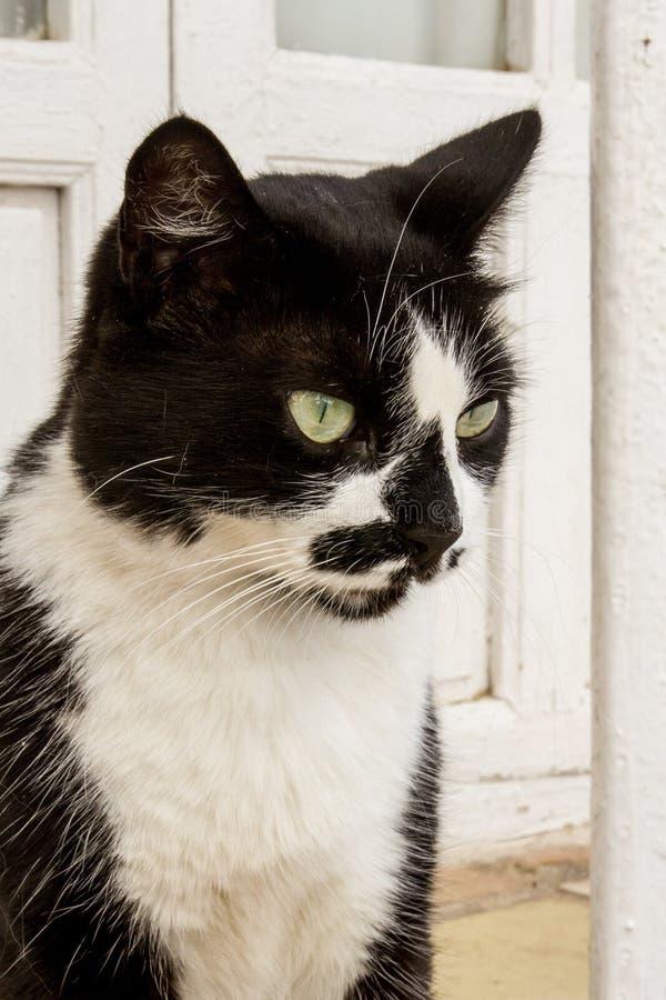 Un chat bicolore sur la rue - image - photo photo stock