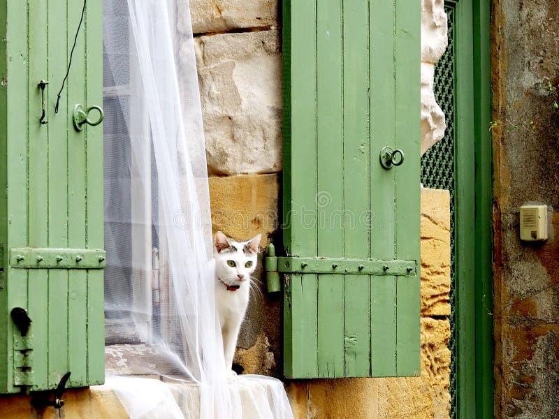 Un chat blanc photographie stock libre de droits