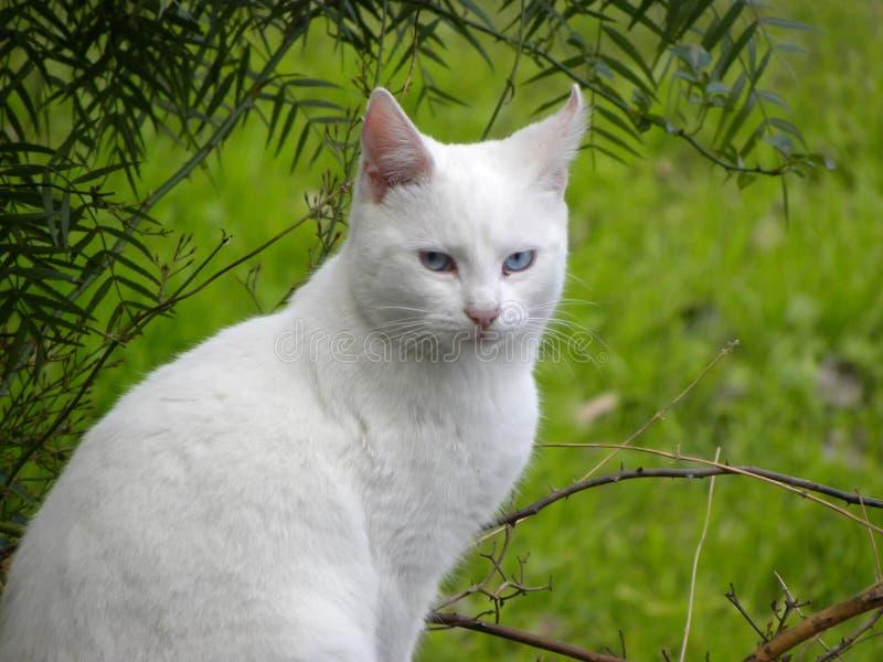 Un chat blanc photo stock