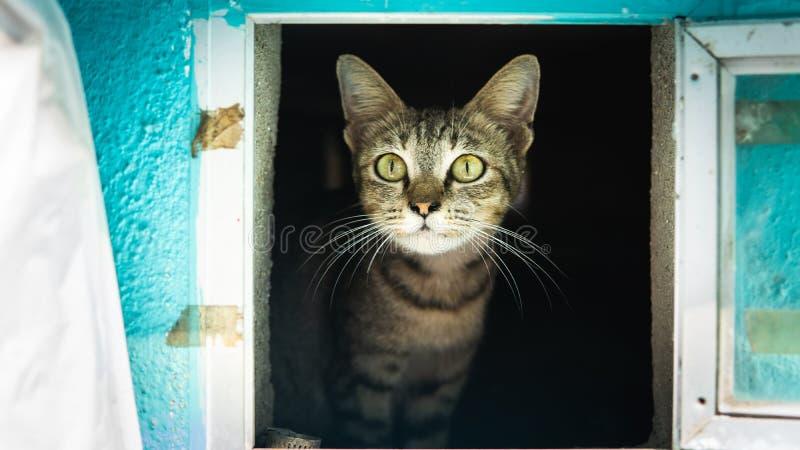Un chat brun et noir mignon de rayures dans une boîte aux lettres Chaton nouveau-né protecteur à l'intérieur de la boîte aux lett photographie stock