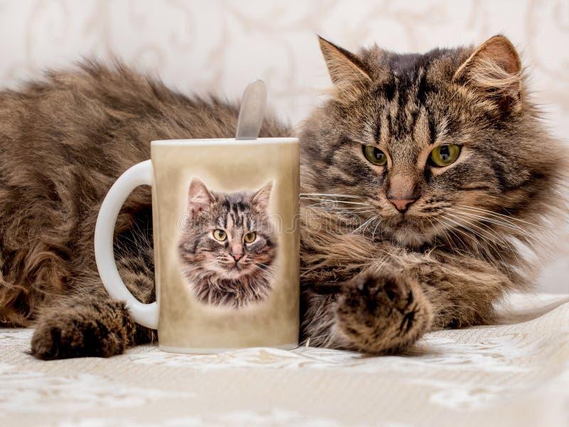 Un chat brun furry se trouve près d'une mug représentant son portrait Il est temps de boire du thé_ photographie stock