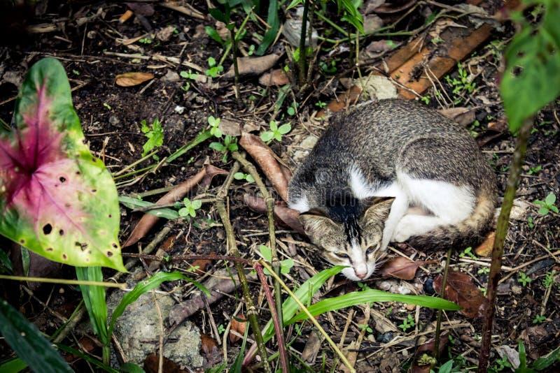 Un chat dans le jardin photo stock