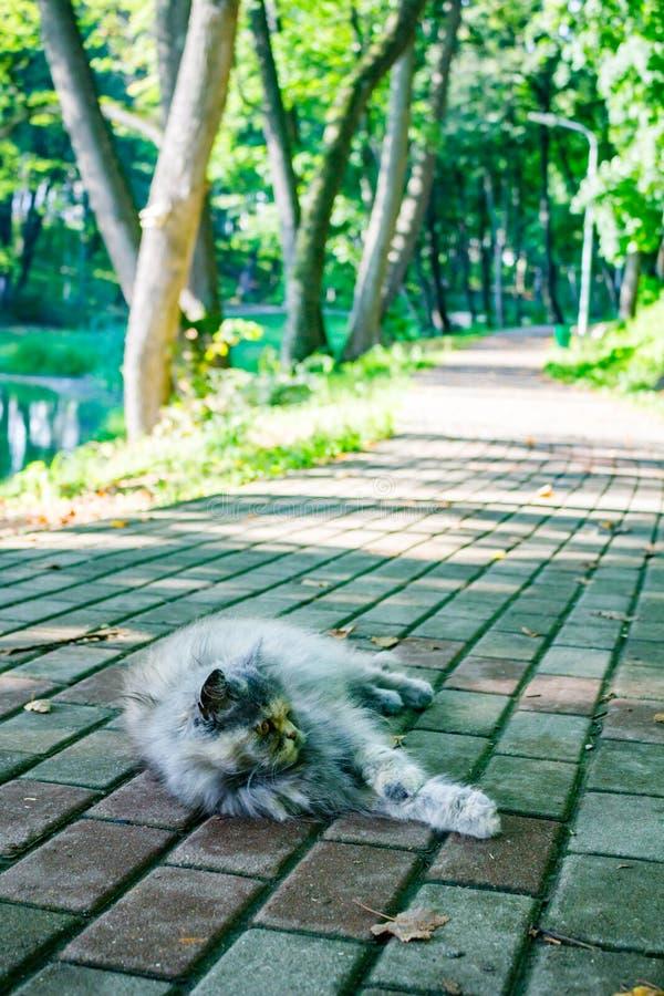 Un chat de rue se reposant sur un chemin pavé en cailloutis en parc un jour d'été image stock