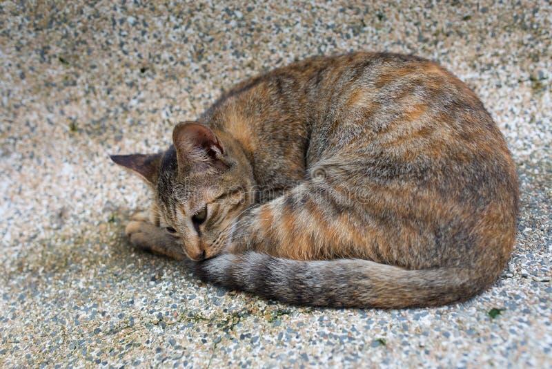 Un chat de sommeil photos stock
