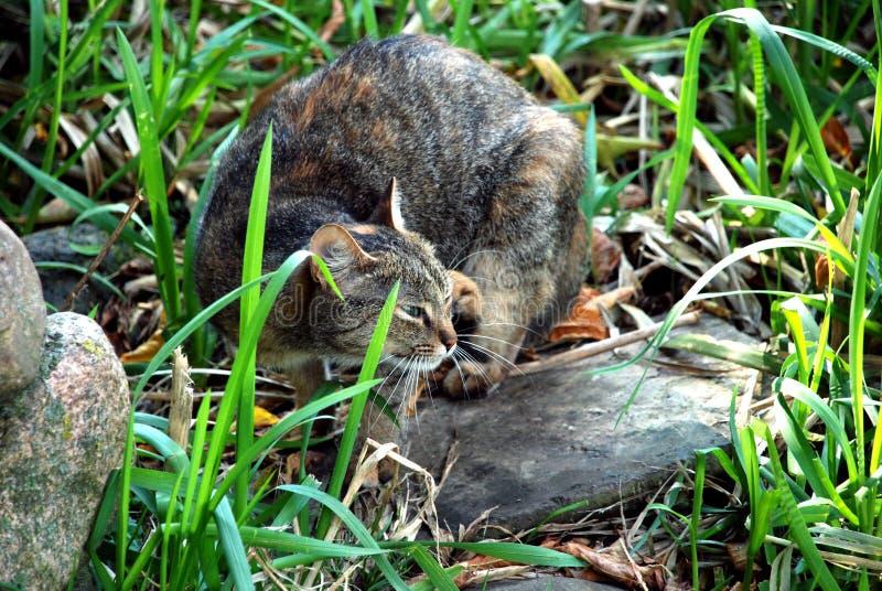 Un chat dedans dans l'herbe photographie stock