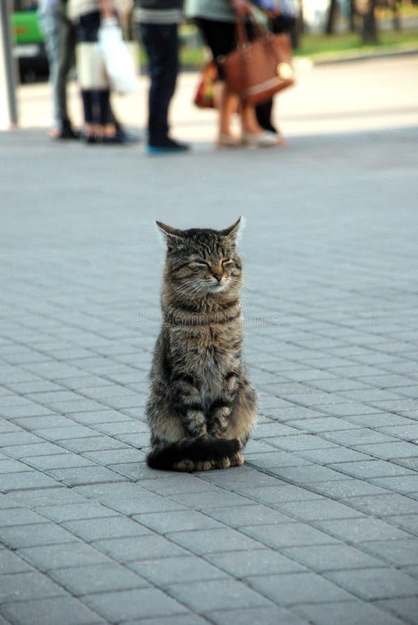 Un chat dedans dans la rue de ‹d'†de ‹d'†de ville image stock