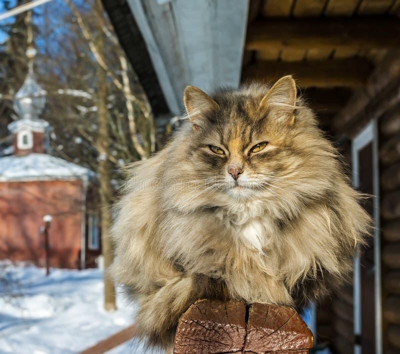 Un chat en hiver photo libre de droits