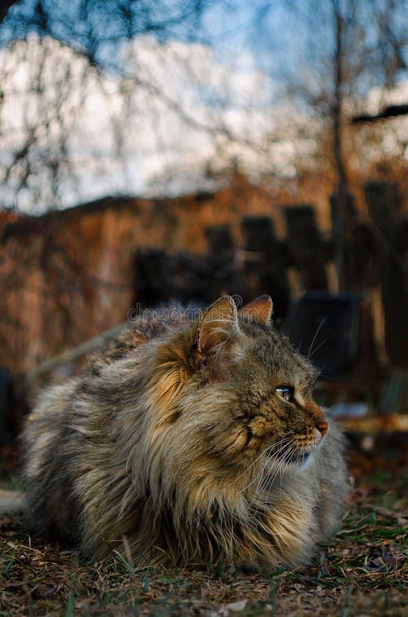 Un chat gentil de lookig se reposant sur la cour photos libres de droits