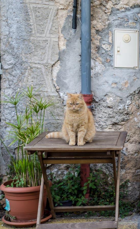Un chat grincheux de Lokking se reposant sur une extérieur-table images libres de droits