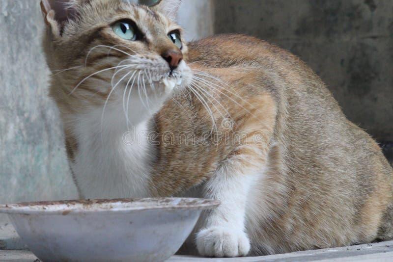 Un chat grincheux et mignon photos libres de droits