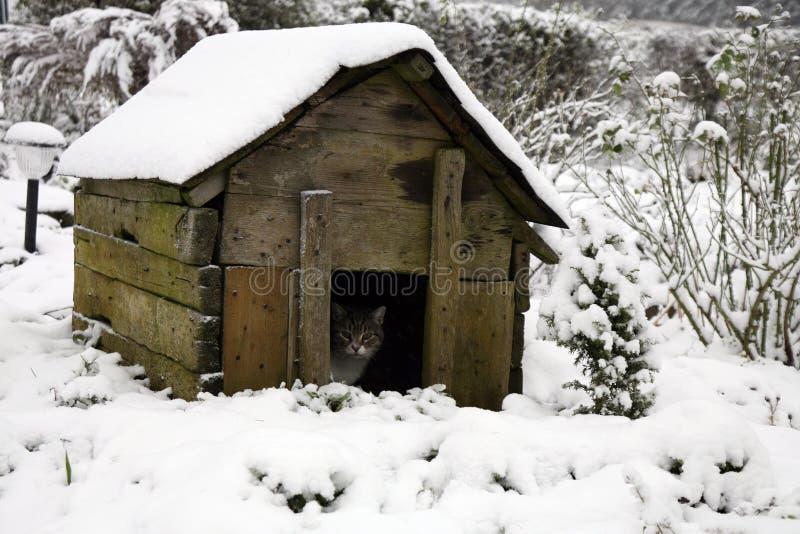 Un chat gris et tigré dans le chien-chenil pendant l'hiver photo libre de droits
