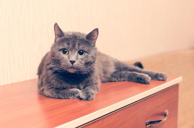 Un chat gris se trouve sur la raboteuse photographie stock libre de droits